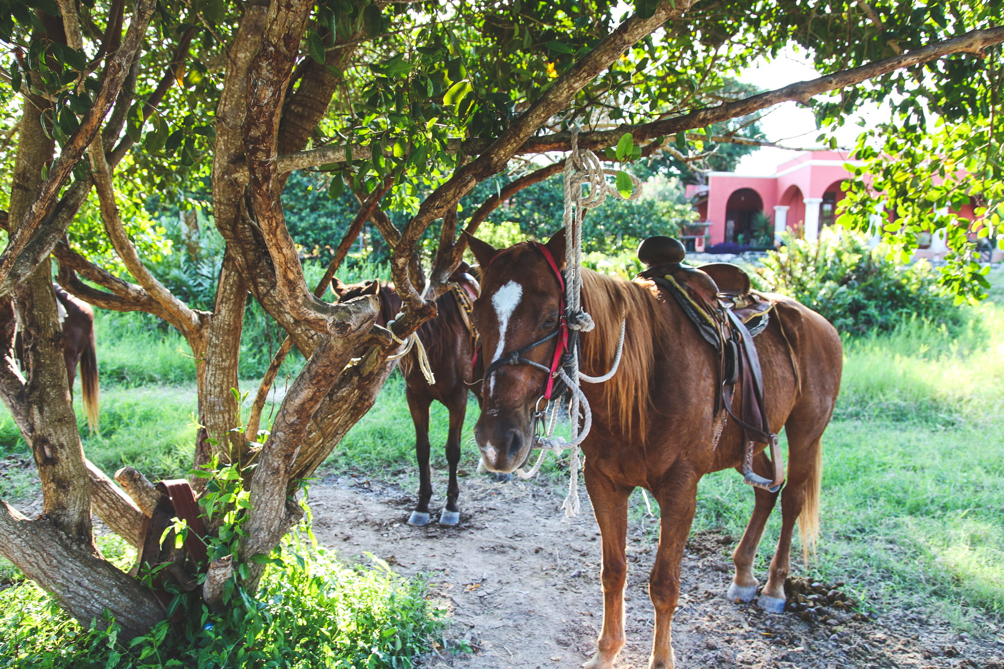 Horses in the Mexican Riviera