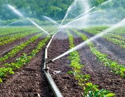 Ogun Govt. Reaffirms Commitment To Boost Agric Sector