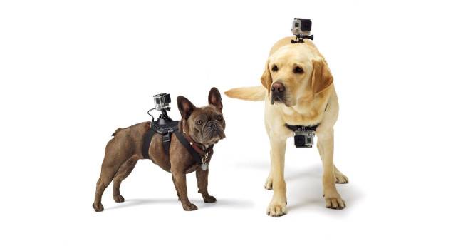 Fetch GoPro Dog Harness