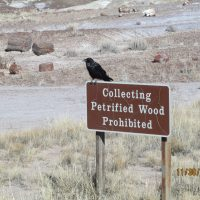 Thanksgiving Vacation Part 3: Petrified Forest National Park