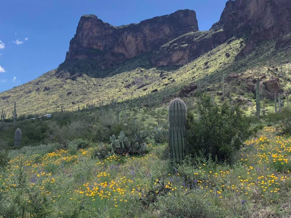 Wildflowers at Picacho Peak State Park
