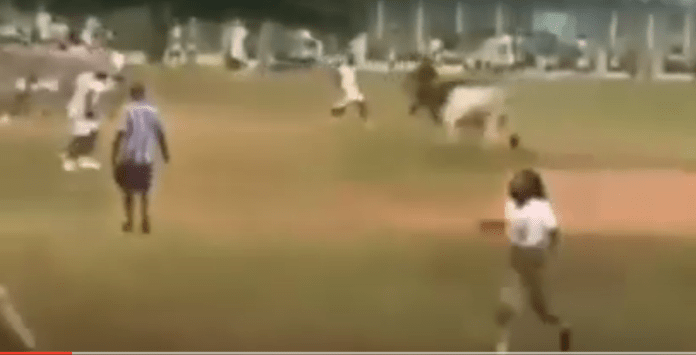 Drama As Cow Invaded NYSC Orientation Parade [VIDEO]