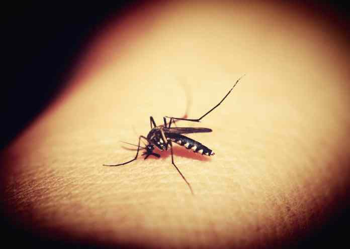 Mosquitoes in Chamblee test positive for West Nile Virus