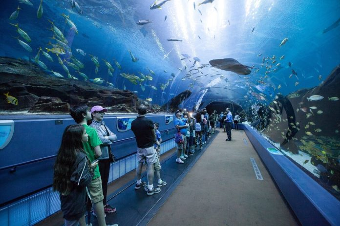 The Georgia Aquarium is now a friendly destination for visitors on the autism spectrum