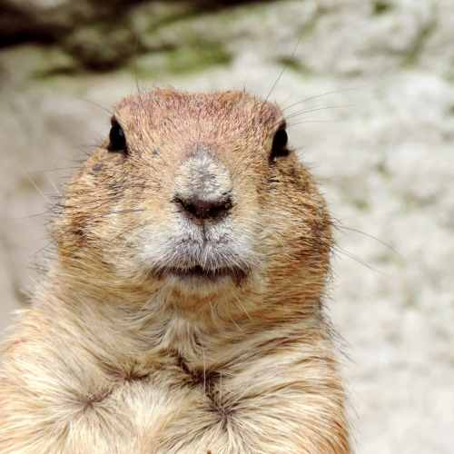 Georgia's Groundhog Gen. Beauregard Lee sees shadow despite 60 degree temperatures