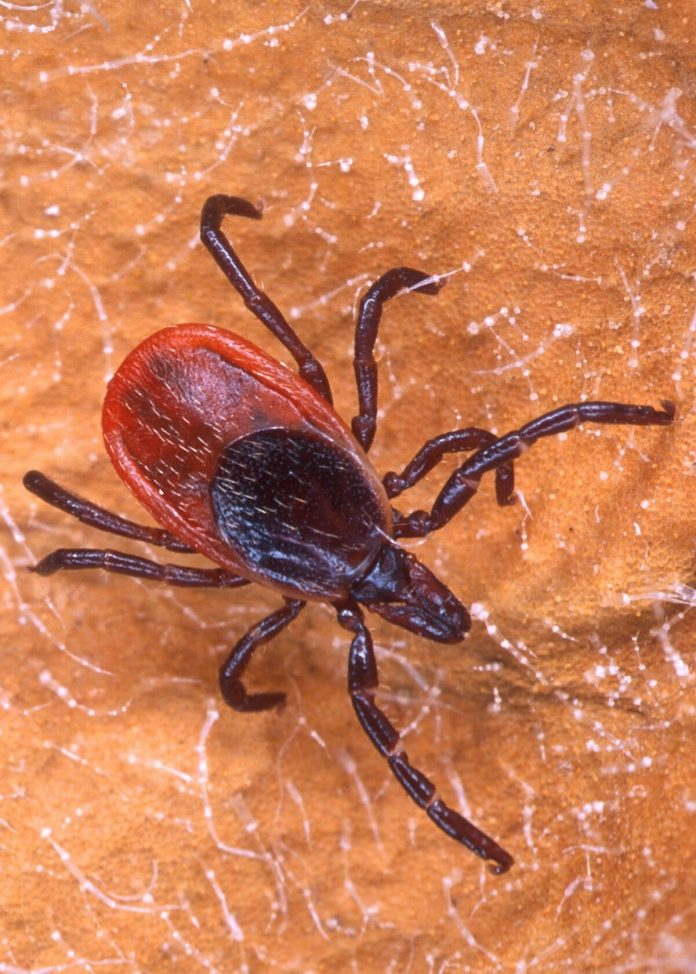 How to keep ticks from ruining your time outside