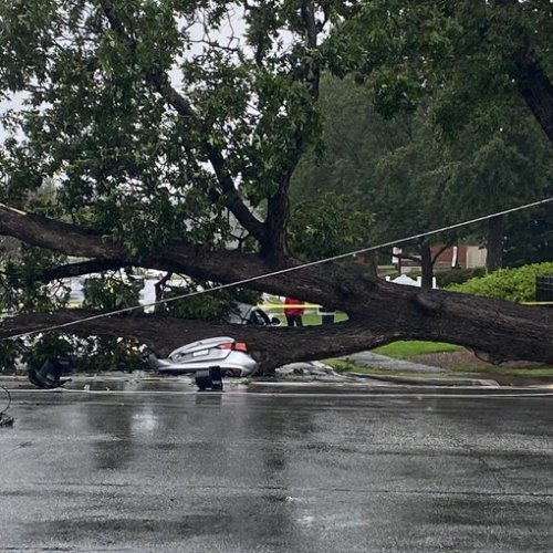 A massive tree fell on cars in Dunwoody