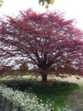 Tree at Avebury