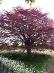 Tree at Avebury
