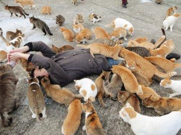 kedi adası aoshima