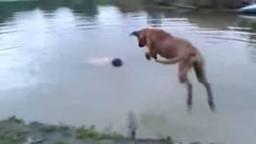 sahibini kurtaran köpek