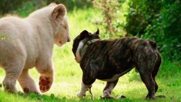 Hayvanların Dostluğu