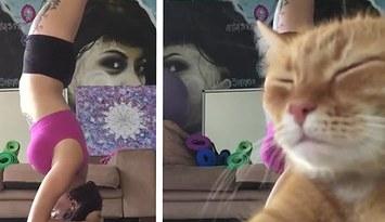 yoga videosunu bozan kedi