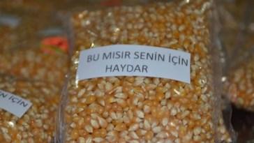 mısıra isim yazmak