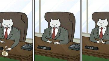 Kedi-patron-olsa