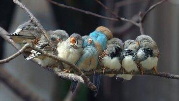 kuş güzel foto