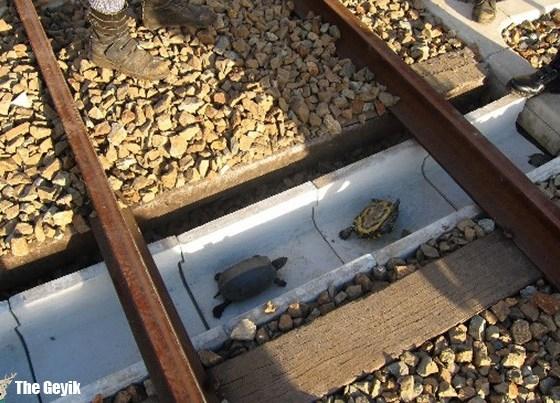kaplumbağa yolu