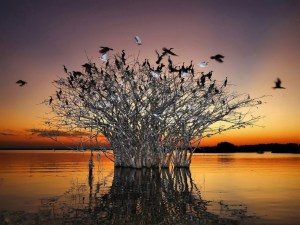 Pantanal Matogrossense Ulusal Parkı
