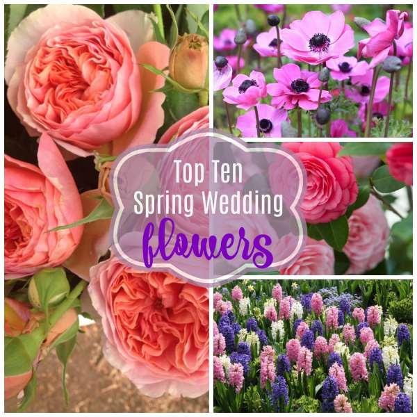 Top ten spring wedding flowers springbridalbouquetinspo top ten spring wedding flowers springbridalbouquetinspo pickyourweddingflowers the gilded gownthe gilded gown the gilded gown mightylinksfo