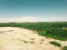 blue sky corn field