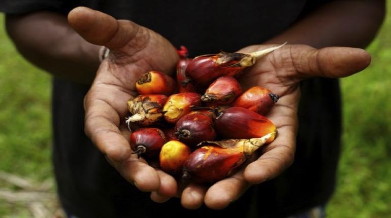 i frutti da cui si estrae l'olio di palma