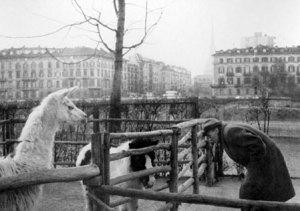 Parco Michelotti - TheGiornale.it