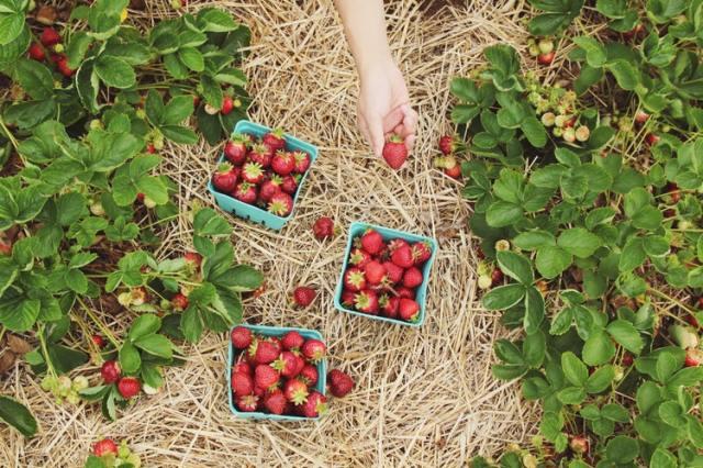 orto fai da te frutta - thegiornale
