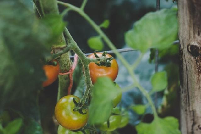 curare un orto - thegiornale