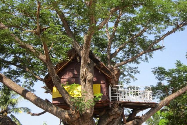 Case sull'albero Piemonte - TheGiornale