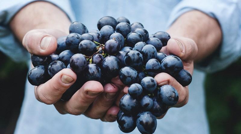 5 vini rossi piemontesi | TheGiornale