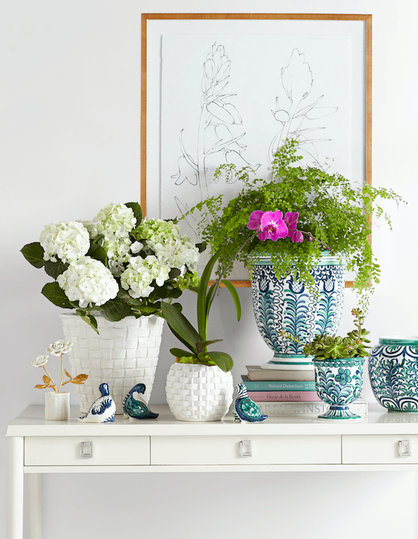Aerin Lauderu0027s New Palm Beach Inspired Collection For .