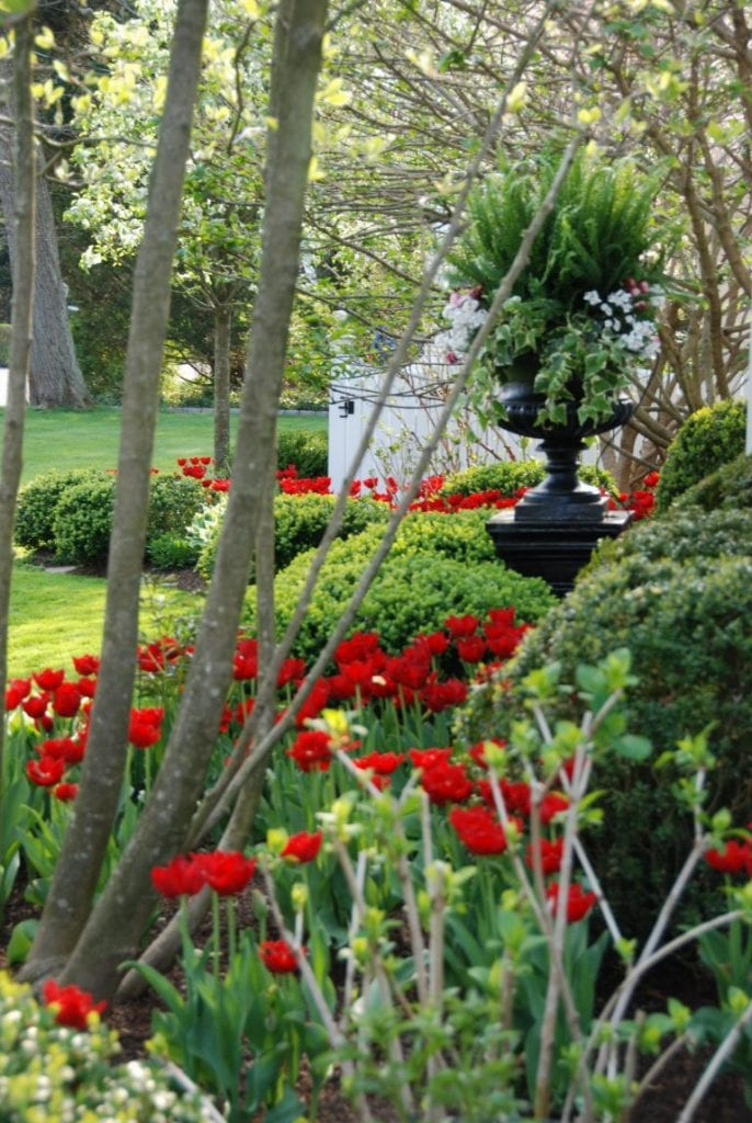 Red Tulips Spring Landscape Ideas The Glam Pad