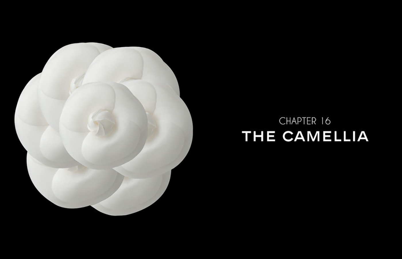 Chanel celebrates its iconic flower – The Camellia – The Glass Magazine