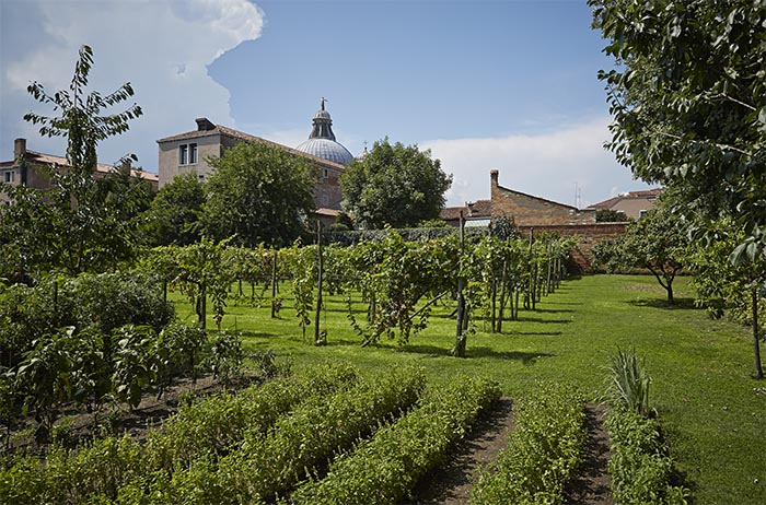 Vineyards at the Cirpriani Hotel