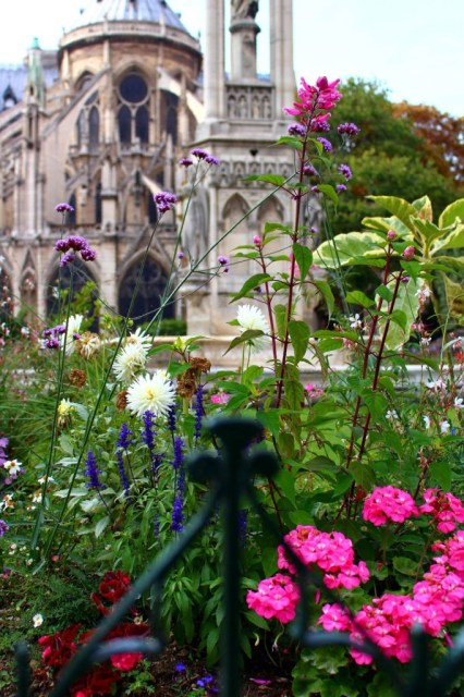 Flowers in Square Jean XXIII, Notre Dame, Île de la Cite, Paris