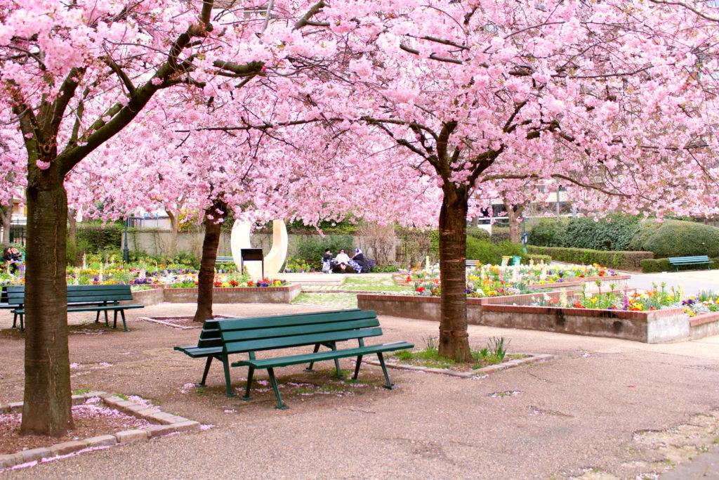Cherry blossom Paris- Jardin Saint-Simonian | The Glittering Unknown