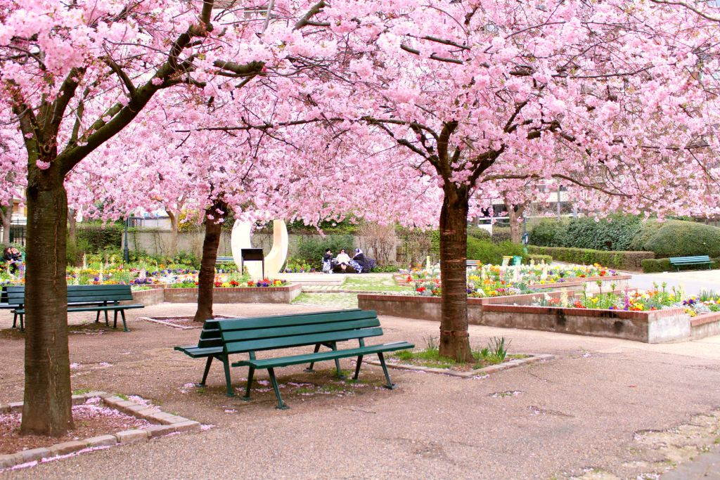 Cherry blossom Paris- Jardin Saint-Simonian | The Glittering Unknown