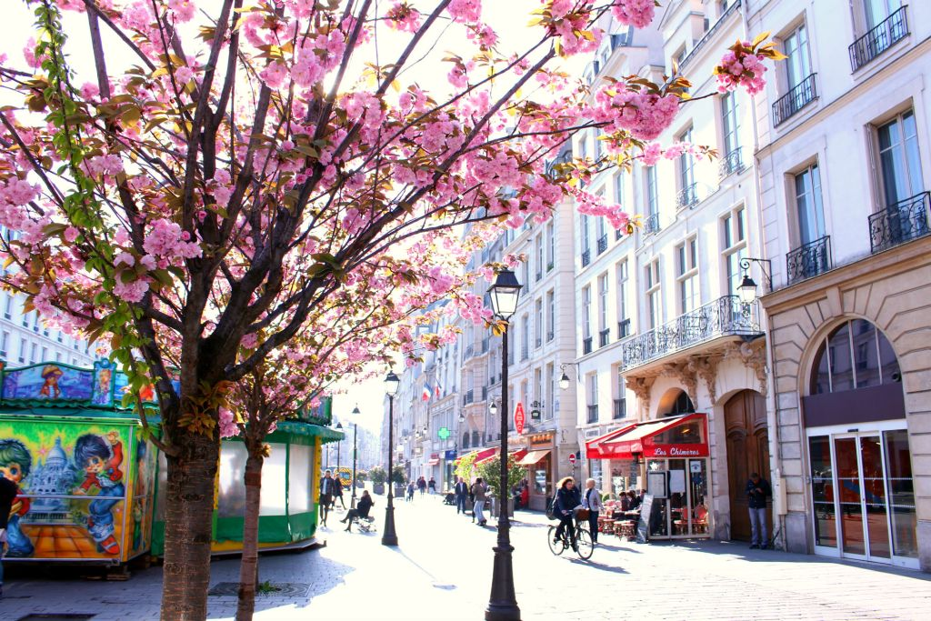 Cherry blossom Paris- Saint Paul| The Glittering Unknown