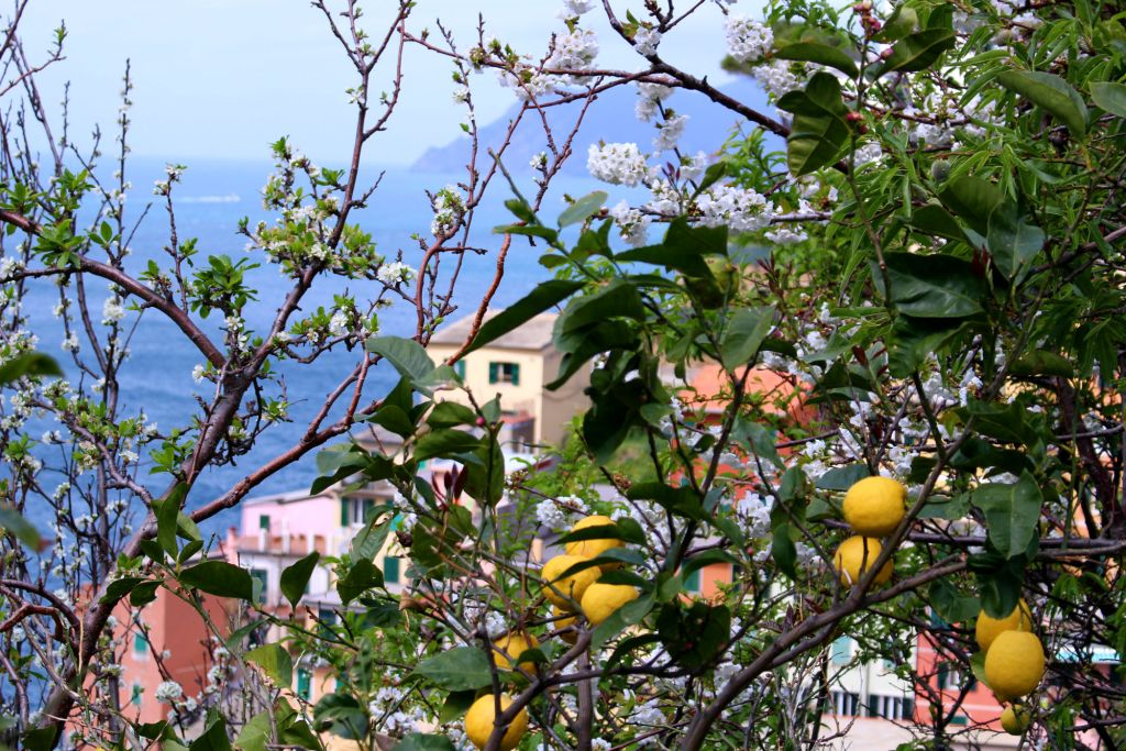 The Glittering Unknown fresh lemons overlooking Riomaggiore Cinque Terre Italy