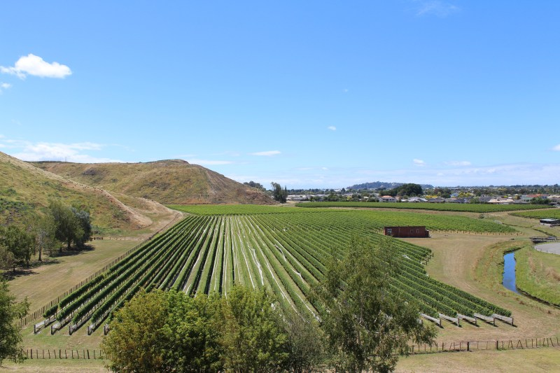 View from Mission Estate Winery