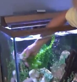 Fish Aquariums And Skin Infections What Is Mycobacterium