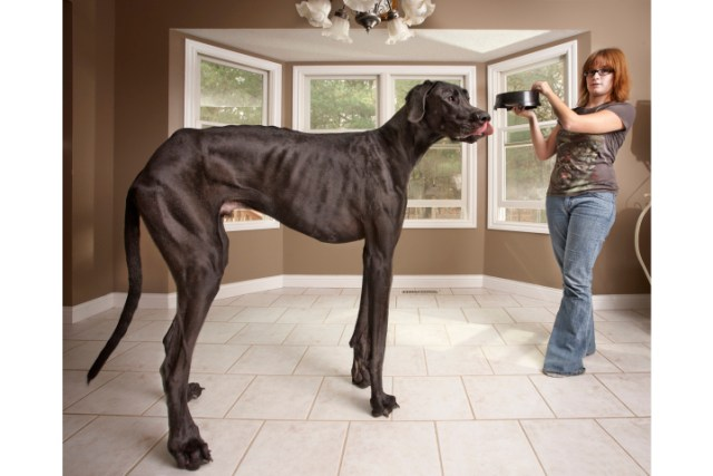Tallest Dog