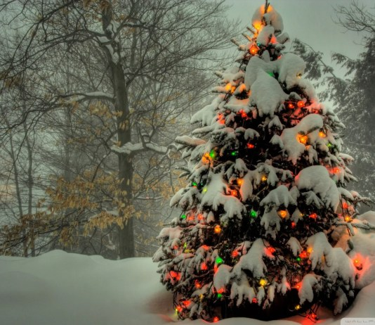 15 HD Christmas Tree Wallpapers for Windows 8
