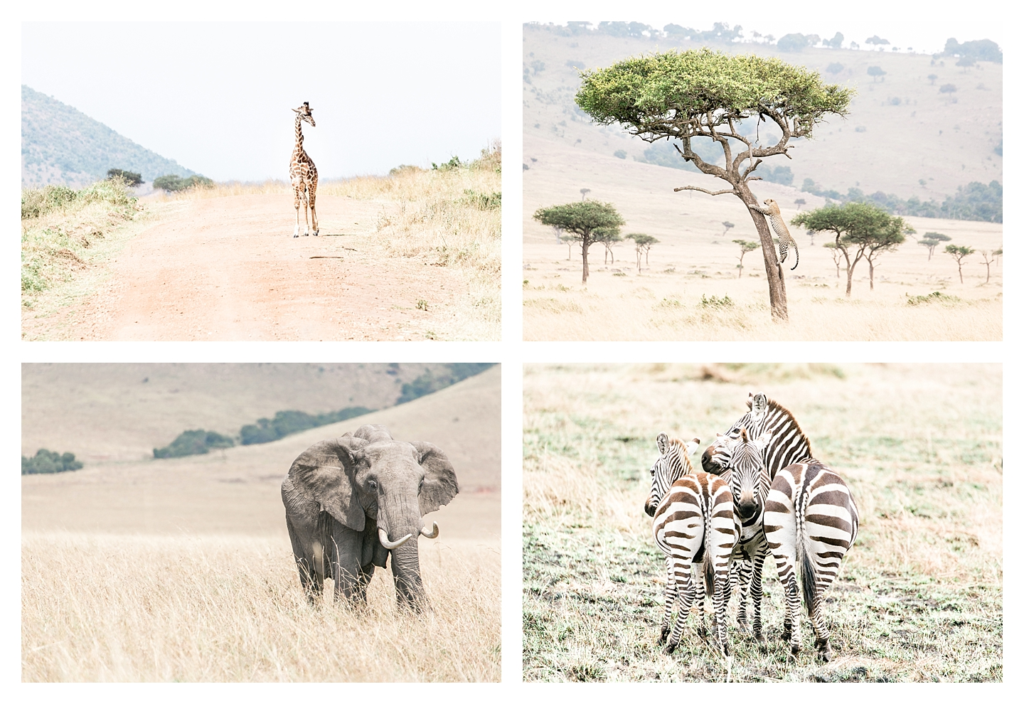 Wildlife in Masai Mara, Kenya, Africa | © The Globetrotter Collective - https://www.theglobetrottercollective.com