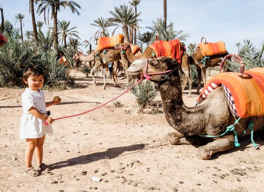 Camel in Marrakesh Morocco