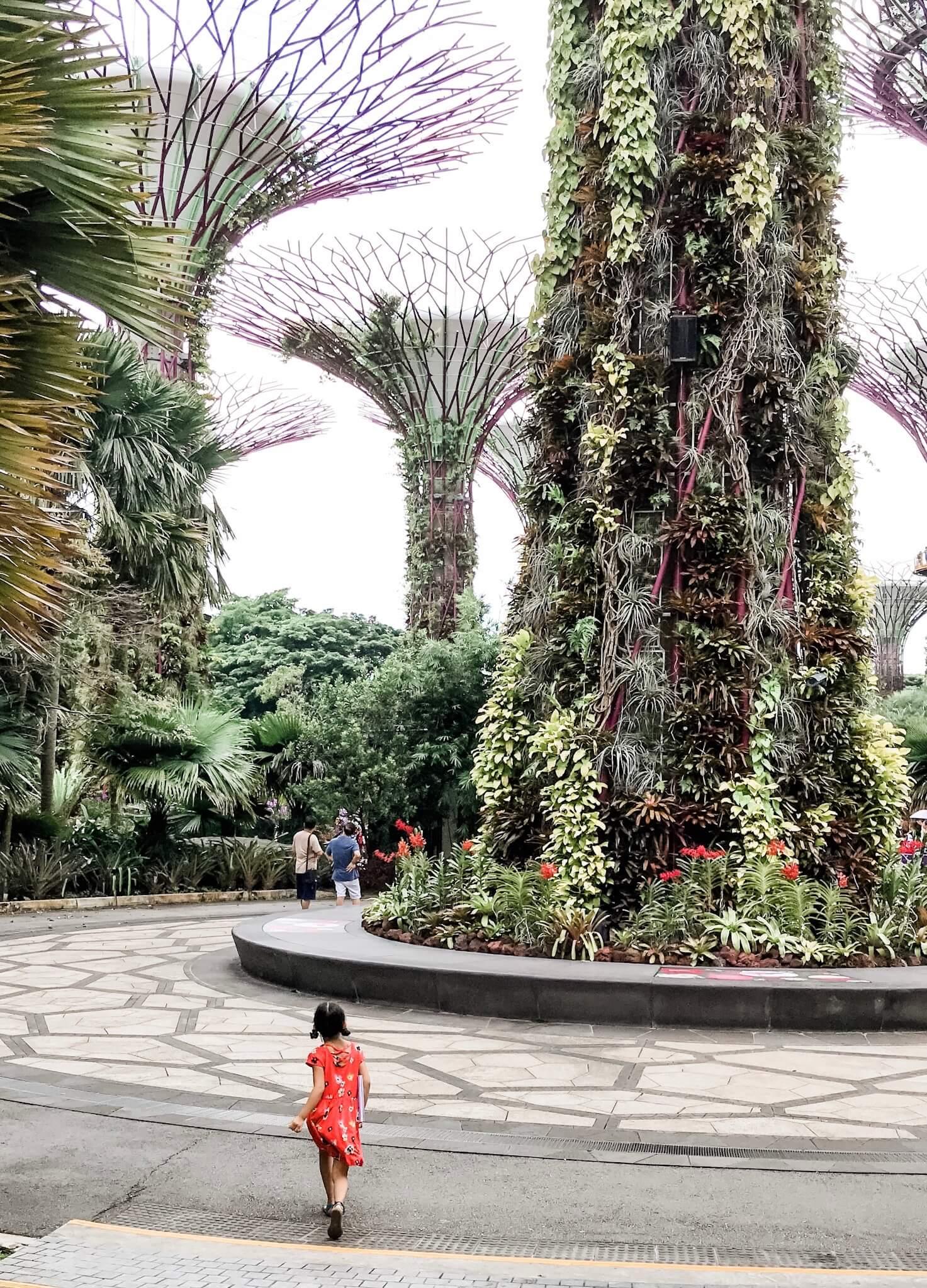 The Supertree Grove - Singapore