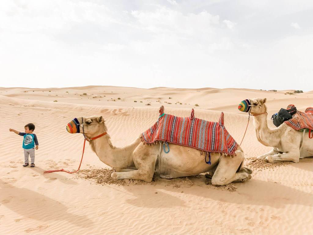 Camel Ride in Abu Dhabi, United Arab Emirates