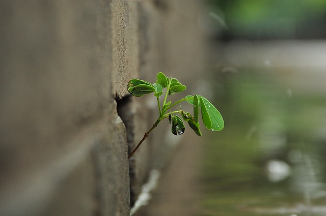 the walls of the root, rainy day, vitality