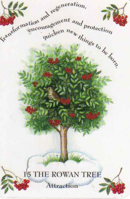 Tree Magick by Gillian Kemp