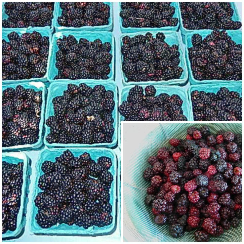 Blackberries at the market now